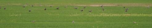 Grasspiper platter